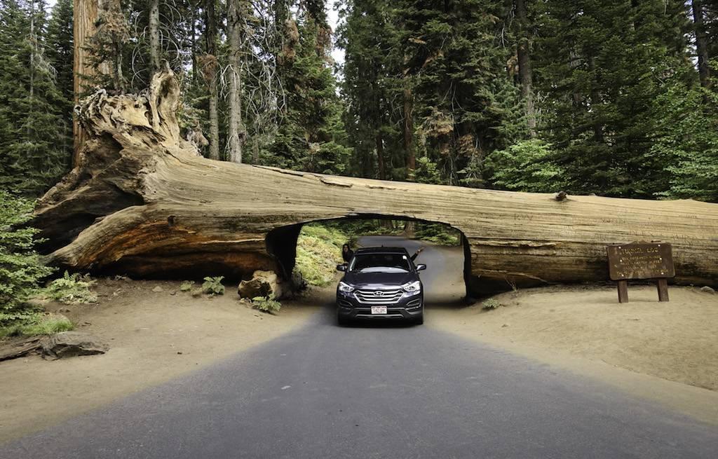 parque-nacional-sequoia-californa