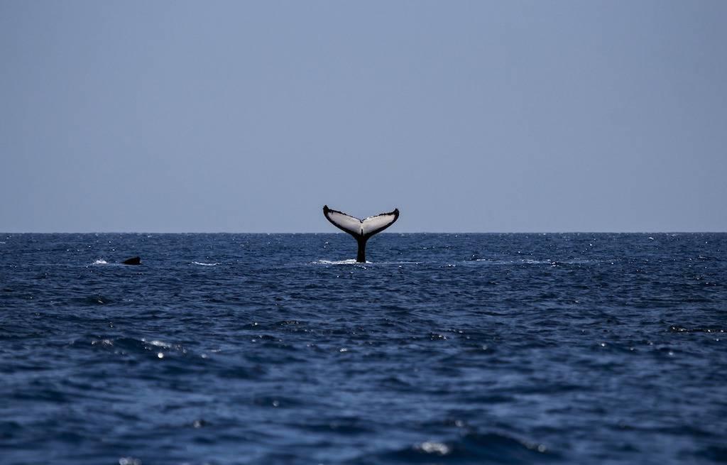 baleias-whales-gaspesie