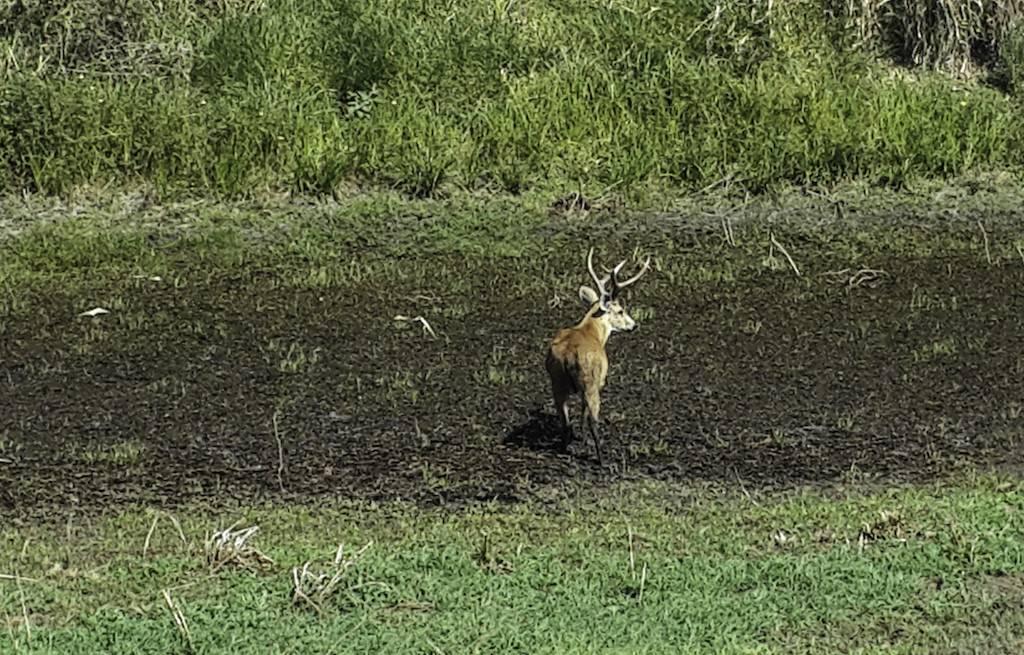 vida-selvagem-pantanal-MS