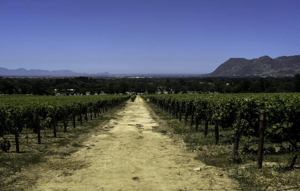 vinicoloa-cidade-do-cabo-africa-do-sul