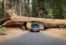 usa-road-tripeua-sequoia-national-park-california
