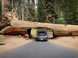 usa-road-tripeua-sequoia-national-park-california